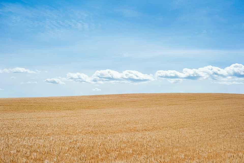 高雄土地借錢價值最大化!從實際案例了解如何辦理持分土地借錢